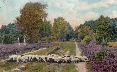 Ansichtskarte-Weg-bei-Wintermoor-Geversdorf-1914