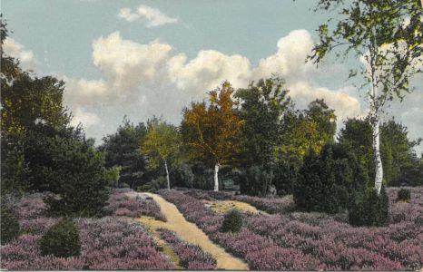 Heideweg Wintermoor-Schneverdingen, kolorierte Ansichtskarte