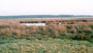 Bombenkrater in Ottersmoor, im Hintergrund der Wald von Kamperheide (1999)