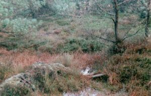 Im Moor an der Heidkoppel wurde Torf in Handarbeit gestochen. Die Stege zwischen den Stichen sind bis heute zu erkennen.