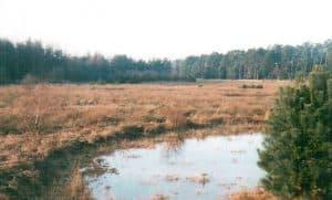Wiesen / Niedermoor am Wehlener Weg 1999