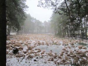 Wintermoorer Heidkoppelmoor im Januar 2016