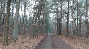 Weg von der Betonstraße zur Siedlung, Januar 2017