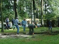 Zehn Bäume auf Grabfeld beseitigt