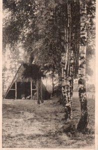 Birken in Wintermoor - undatierte Ansichtskarte 520 vom Kunstverlag Kumm