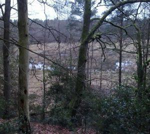 Blick von der Ehrhorndüne auf das Niedermoor
