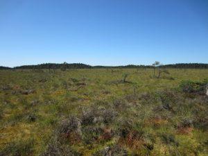 Offene Moorlandschaft (Stora Tingsvallmossen in Schweden)
