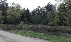 Hügelgräber bei Ehrhorn im Mai 2017