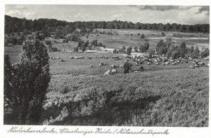 Ansichtskarte Niederhaverbeck, Foto A. Menke, Verlag Rud. Reher