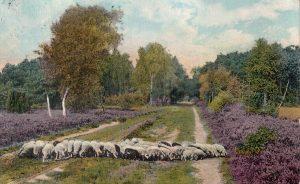 Ansichtskarte von 1914 mit Weg bei Wintermoor